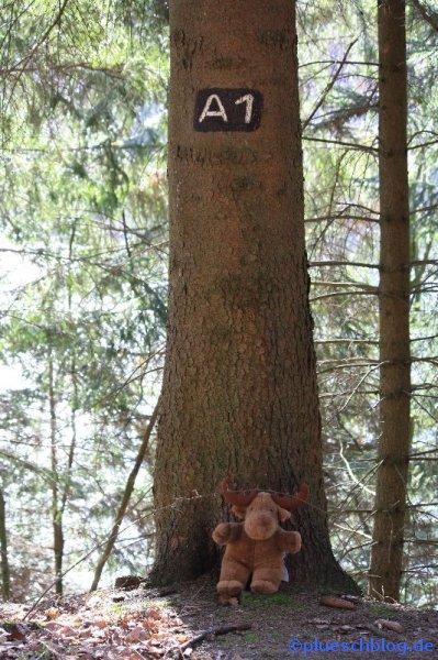Breitenbach Talsperre 17