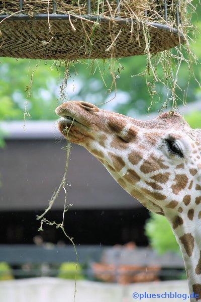 Duisburger Zoo 02