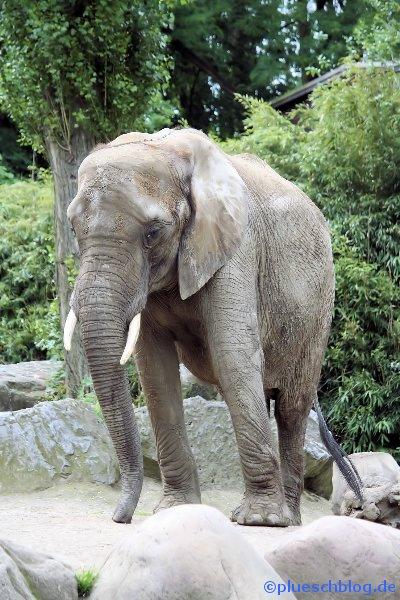Duisburger Zoo 07