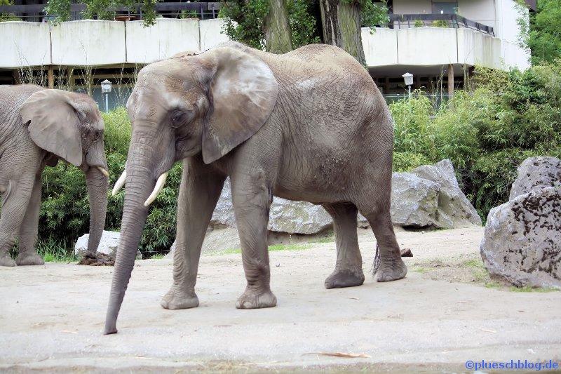 Duisburger Zoo 08