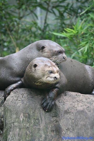 Duisburger Zoo 12