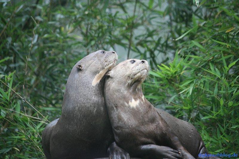 Duisburger Zoo 13