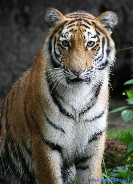 Duisburger Zoo 20
