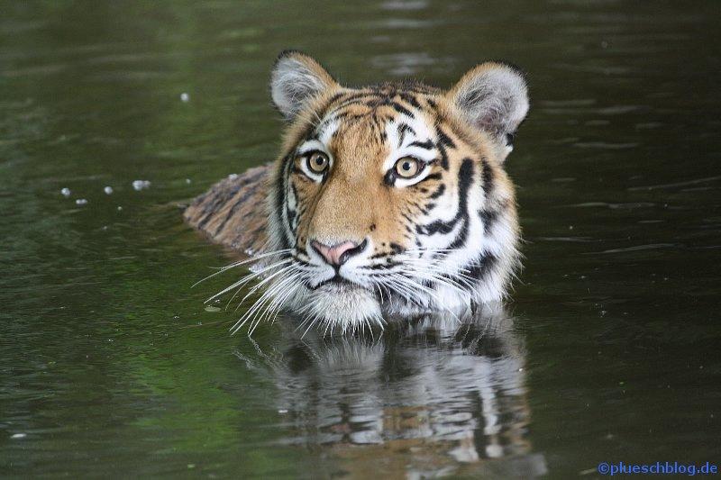 Duisburger Zoo 23