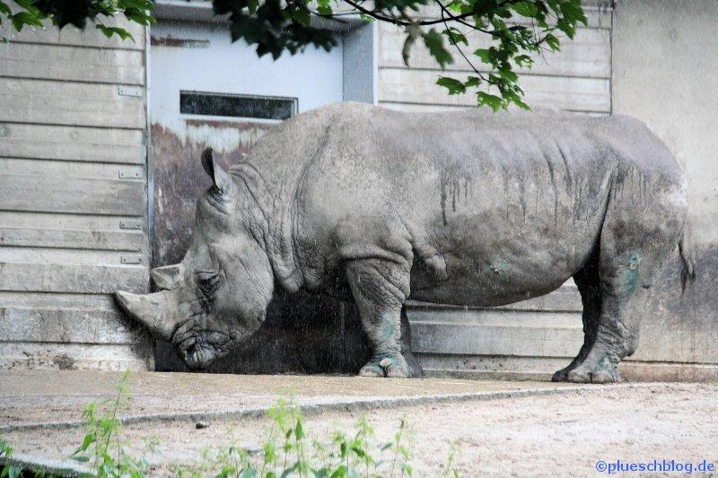 Duisburger Zoo 36