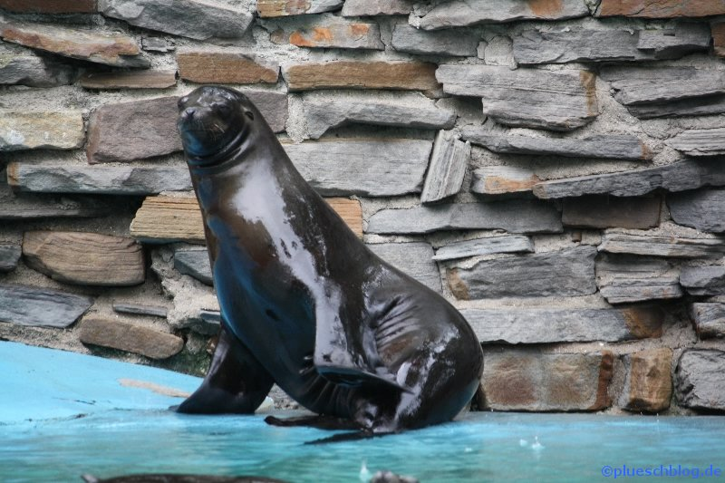 Duisburger Zoo 37