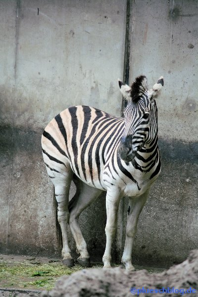 Duisburger Zoo 41
