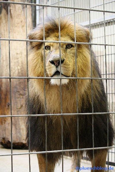 Duisburger Zoo 60