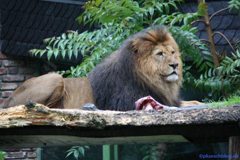 Duisburger Zoo 64