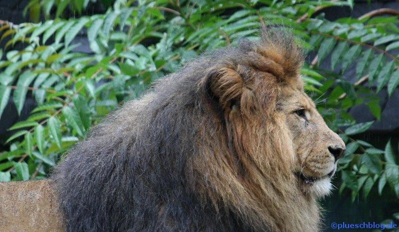 Duisburger Zoo 65