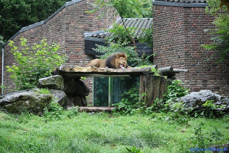 Duisburger Zoo 69