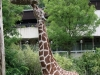 Duisburger Zoo 03