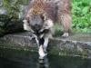 Duisburger Zoo 34