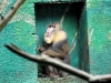 Duisburger Zoo 39