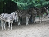 Duisburger Zoo 42