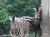 Duisburger Zoo 43