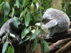 Duisburger Zoo 48