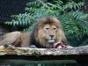 Duisburger Zoo 66