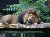 Duisburger Zoo 68