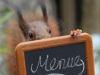 Eichhörnchen 2020