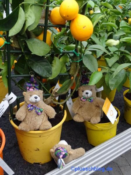 Gartencenter (1)