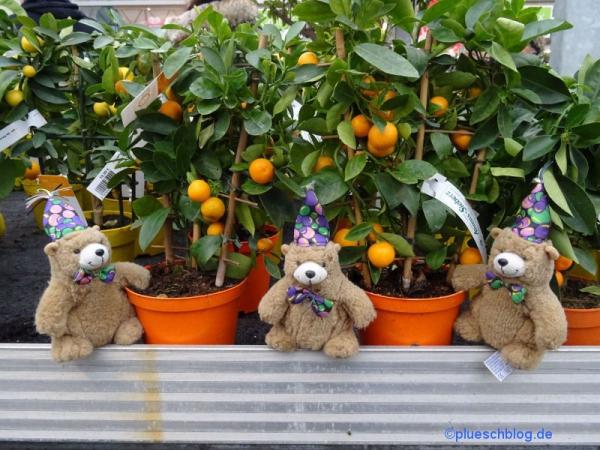 Gartencenter (2)