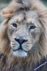 zoo_cgn20_-50