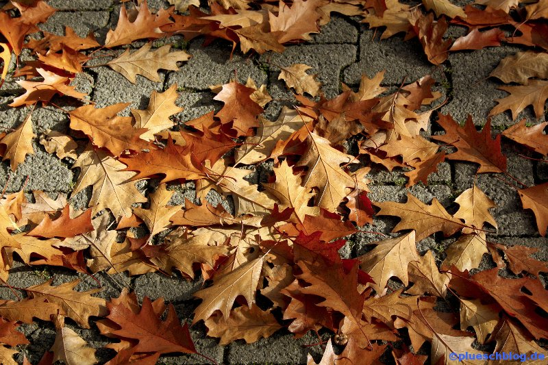 Herbst 10