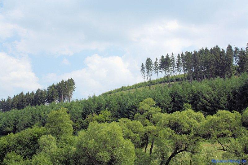 Waldlücke