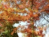 Herbst 08