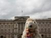 London 2012 033