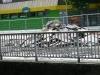 Siegplatte 12.08.2012 14
