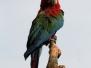 Vogelpark Herborn 2012