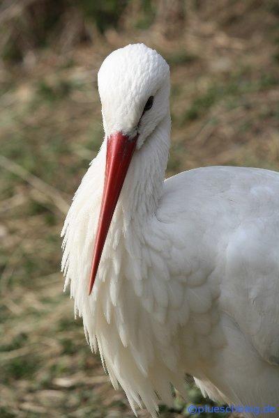 Vogelpark 12 01