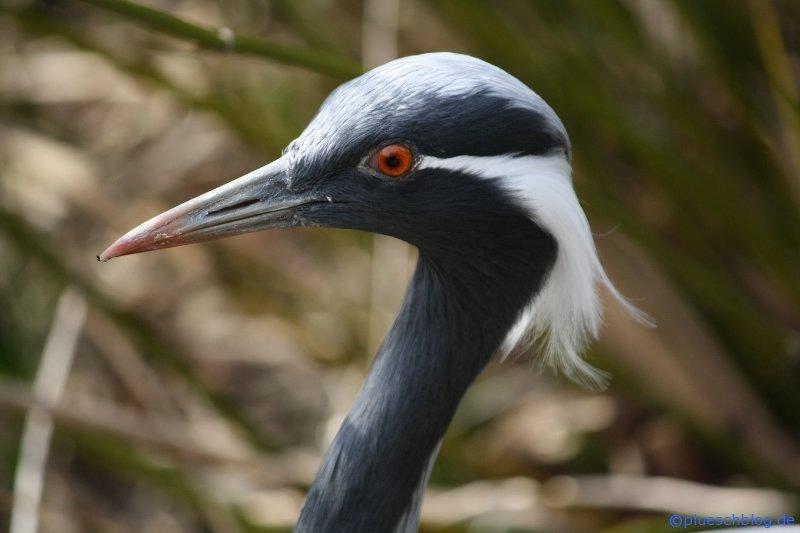 Vogelpark 12 02