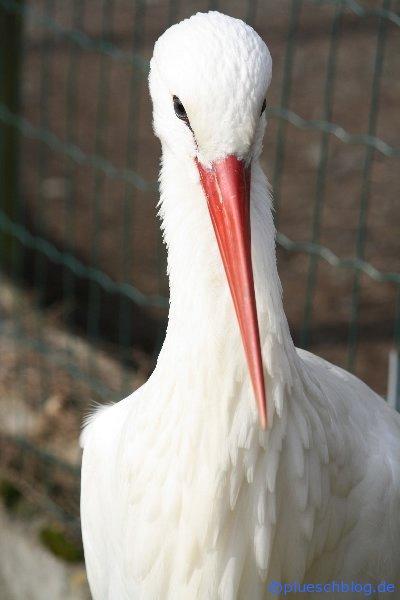 Vogelpark 12 05