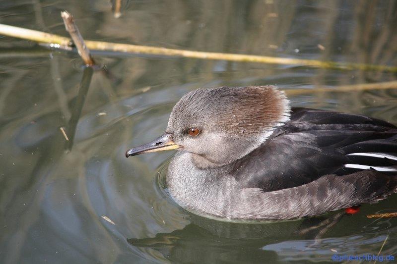 Vogelpark 12 11