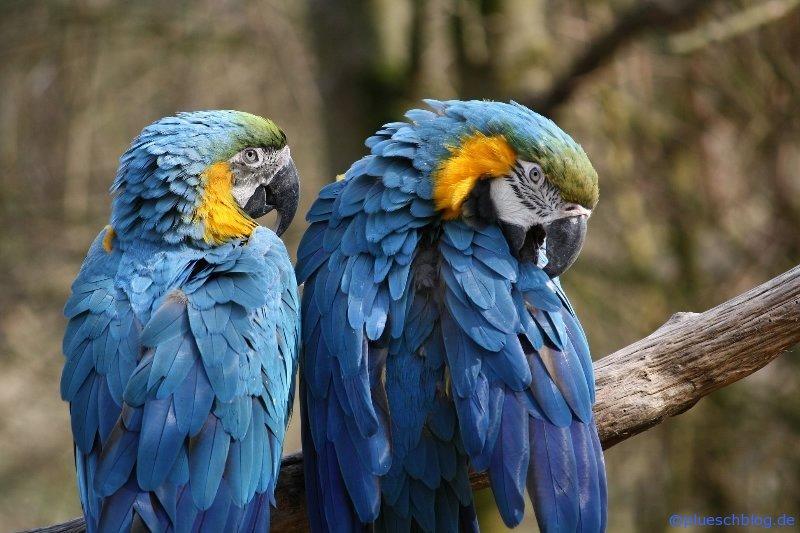 Vogelpark 12 12