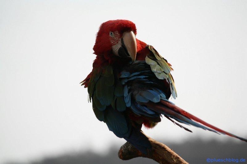 Vogelpark 12 15