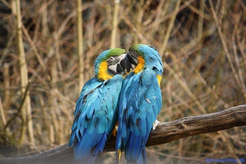 Vogelpark 12 16