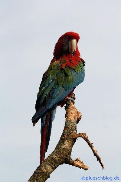 Vogelpark 12 17