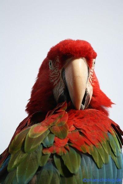Vogelpark 12 18