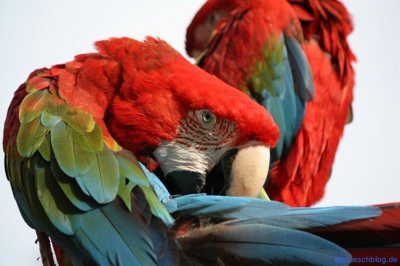 Vogelpark 12 20