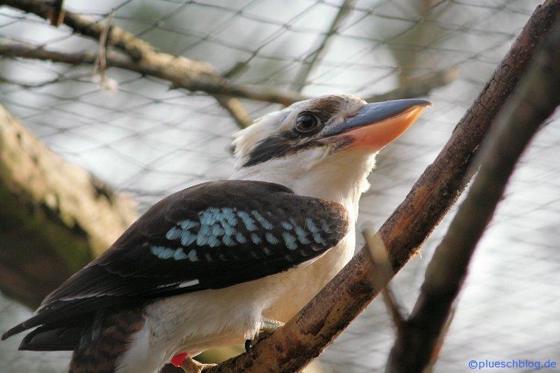 Vogelpark 12 28