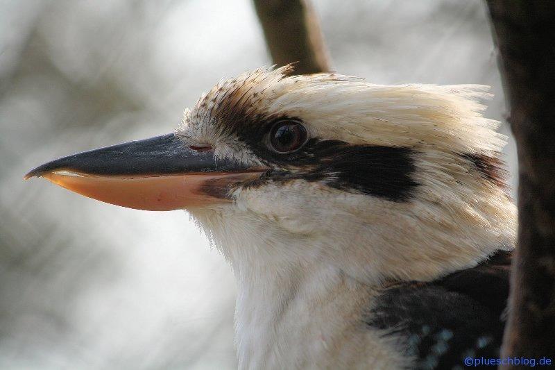 Vogelpark 12 29