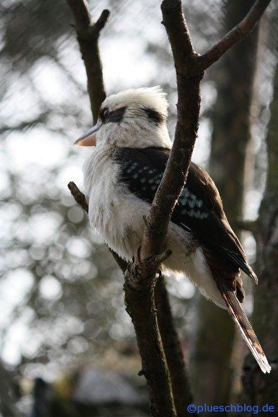 Vogelpark 12 30
