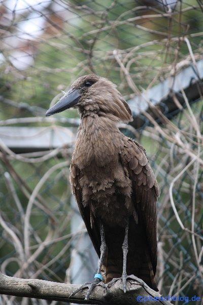 Vogelpark 12 63