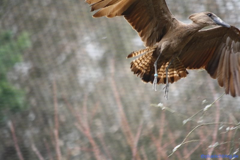 Vogelpark 12 66