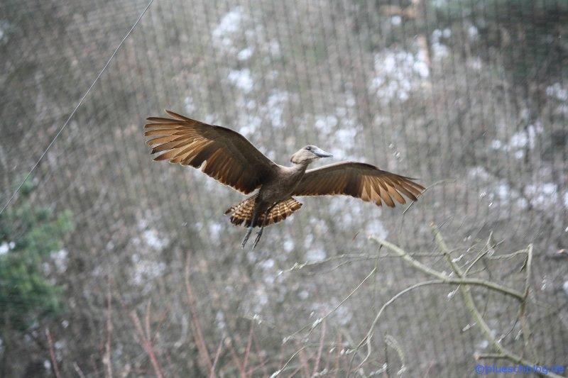 Vogelpark 12 67