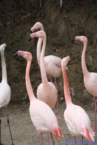 Vogelpark 12 72